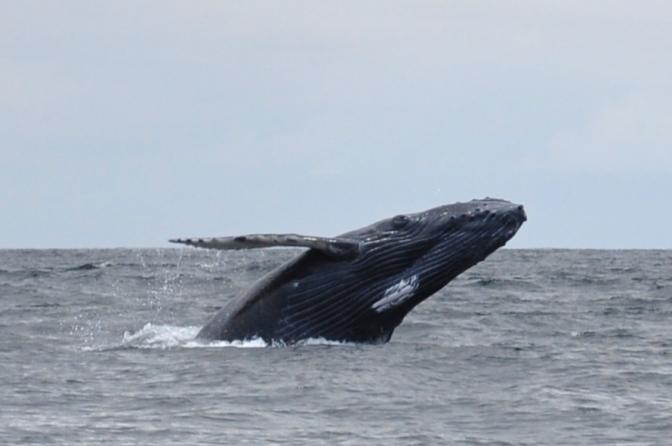 Explain Whales (parts dois & três)…