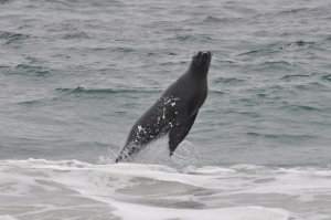 Seal Namibia