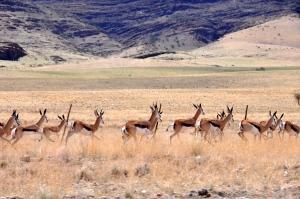 Springboks Namibia