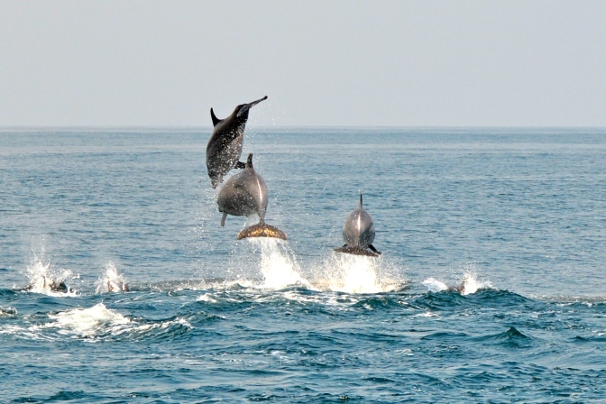 They call him Flipper…