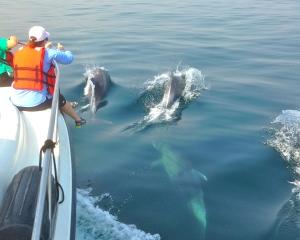 Luanda dolphin