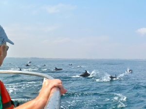 Luanda dolphins