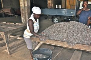 Sao Tome cocoa
