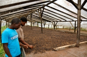 Sao Tome coffee