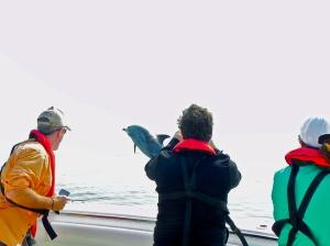 Dolphin jumping in Luanda