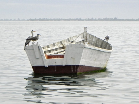 Sea Birds Luanda